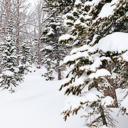 Andrew Whiteford finds huge snow in the side-country of JHMR.