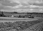 6613 Cedar Mill farms and fields. June 23, 1946.