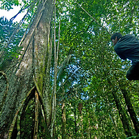 Wilder, a Yanayacu Indian, swings for fun on a vine hanging from a massive tree in Peru's Amazon Jungle.