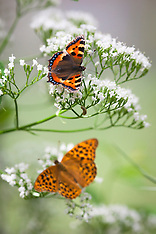 Bees and Butterflies