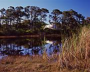Pond, Slash Pines and dunes, St. George Island State Park, Florida.