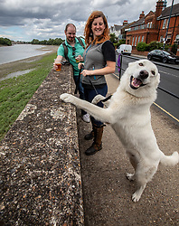 © Licensed to London News Pictures. 28/06/2020. London, UK. Laura Dart 29 with her dog Atlas, a Swiss Shepherd's dog, enjoys a pint of takeaway beer with Niall Harty 37 at the Watermans Arms next to the River Thames in Barnes, South West London despite the wind and rain as temperatures plummet since last week as forecasters predict a breezy but sunnier week ahead. Last week, Prime Minister Boris Johnson announced that tourism and hospitality including pubs, restaurants and campsites can now reopen from next Saturday the 4th of July. Photo credit: Alex Lentati/LNP