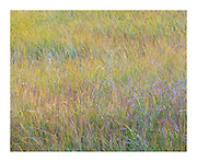multiple exposure of autumnal grasses to give soft, whimsical expression