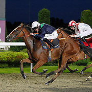 Perfect Alchemy and Jim Crowley winning the 8.00 race