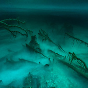 Ciénaga de Zapata National Park is a fully protected ecosystem on Cuba's mainland. Here a cenote shows off her eerie beauty.
