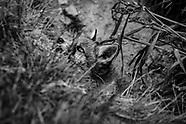 Wildlife BW