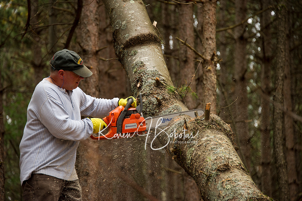 Mark Horvath works to clear one of the single track trails at Ramblin' Vewe Farm on Sunday morning.  (Karen Bobotas/for the Laconia Daily Sun)
