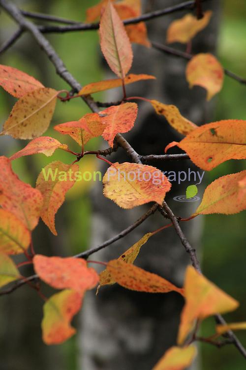 Autumn Cheer_2016_Heidi Watson