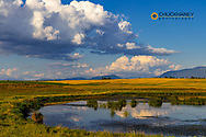 Wetlands pond in the Flathead Valley, Montana, USA