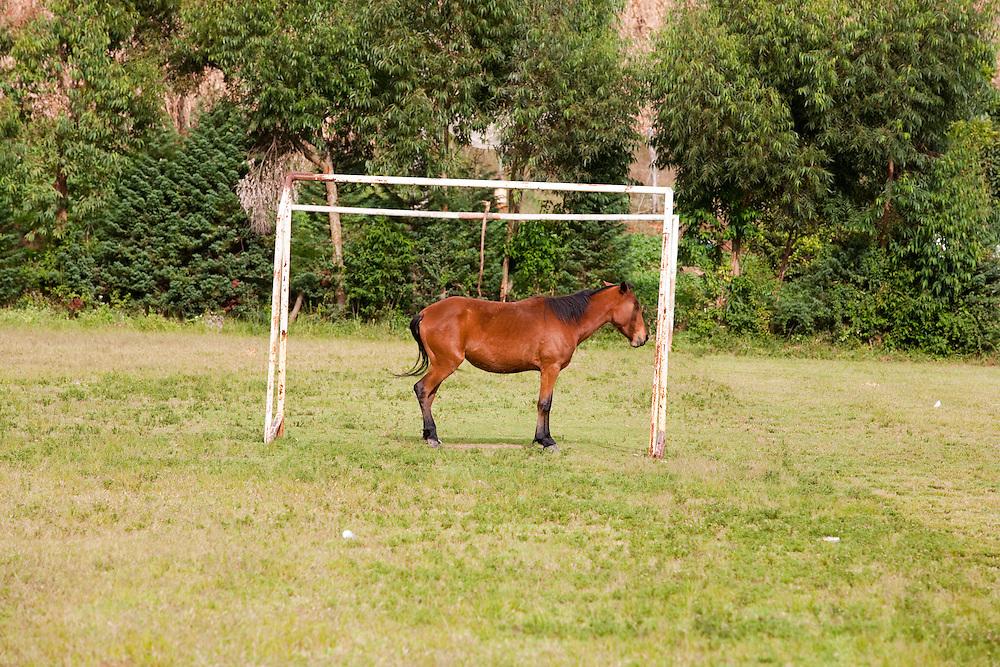 Goncalves_MG, Brasil...Cavalo em um campo de futebol em Goncalves...A horse in the soccer field in Goncalves...Foto: LEO DRUMOND / NITRO.....