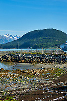 Haines Beach and Harbor Panorama. Image 9 of 11 images taken with a Nikon D300 camera and 18-200 mm VR lens (ISO 400, 34 mm, f/11, 1/500 sec). Raw images processed with Capture One Pro. Composite panorama created using AutoPano Giga.