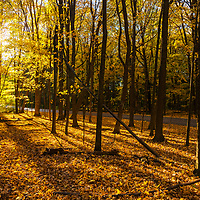 The sun shines through the dense forest at Devils Lake in Wisconsin in the fall