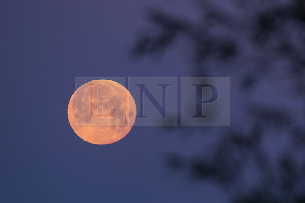 © Licensed to London News Pictures. 06/06/2020. RICKMANSWORTH, UK.  June's full moon, known as a Strawberry Moon, sets at Rickmansworth Aquadrome in north west London.  June's full moon, according to The Old Farmer's Almanac, was the signal for Native American Algonquin tribes to harvest wild strawberries.  This month's full moon also coincides with a subtle penumbral eclipse, which occurs when the Earth casts a slight shadow over the Moon.  Photo credit: Stephen Chung/LNP