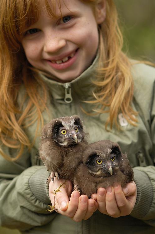 Mimmi Widstrand with Boreal Owl chicks, Aegolius funereus, Ecotourism operator Nordic safari, Västmanland, Sweden.