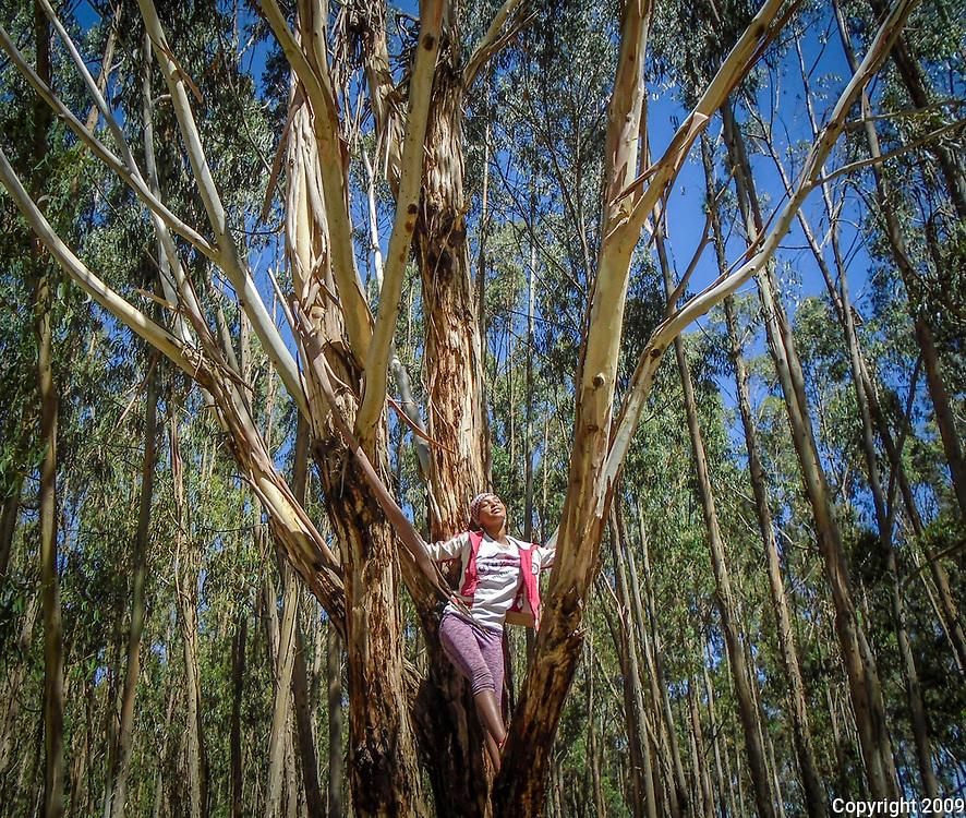 Rooted by Burtucan Wagene