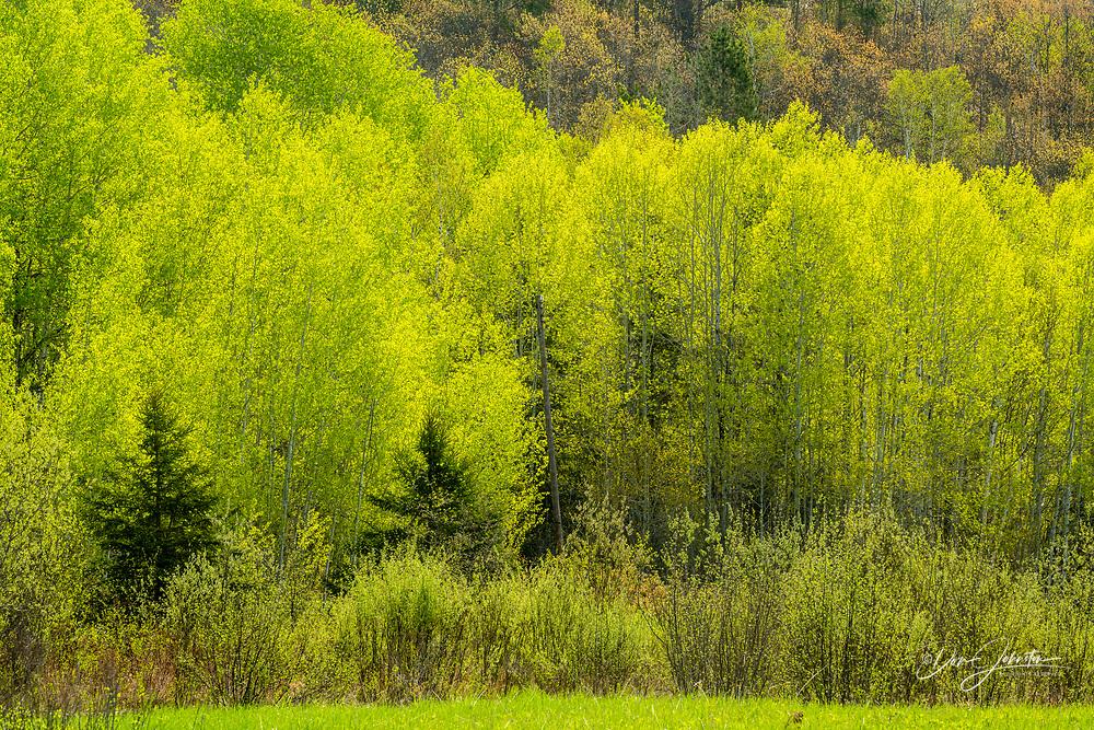 Spring foliage, Greater Sudbury, Ontario, Canada