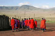 A group of Massai warriors armed with spears marching off Photographed in Tanzania