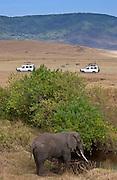 Elephant feeding in Ngoro Ngoro Crater, Tanzania
