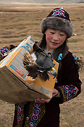 Kazakh eagle huntress & eagle<br /> Putting into a box to travel by car<br /> Mongolia's largest ethnic minority<br /> in Altai Mountains<br /> Western Mongolia