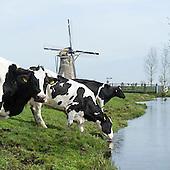 Typisch hollands landschap koeien koe cows windmolen molen