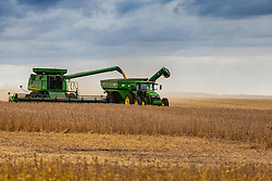 Soybeans are harvested from a field in central Illinois by combines.  The combines fill wagons pulled by tractors which in turn deliver the grain to a larger truck or tractor trailer for delivery to a grain elevator or storage site.