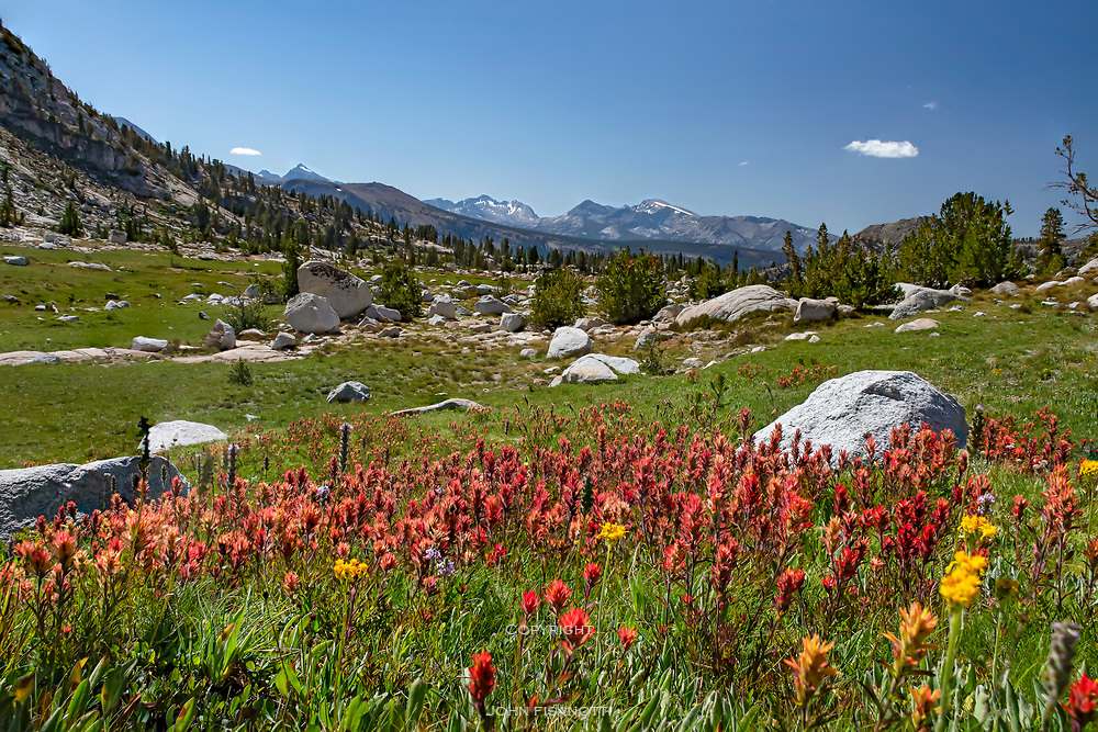 Indian Paintbrush along the Pacific Crest Trail near Silver Pass Lake