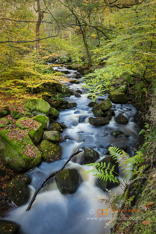 An array of early autumn colours border the flowing waters of Burbage Brook as it passes through Padley Gorge in the Derbyshire Peak District. A beautiful woodland scene in England, UK.