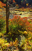 Fall color, wetland,. Promised Land State Park, Pennsylvania, USA
