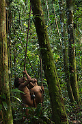 Huaorani Indians - Mipo Wira & Oña Yate out hunting with their blowguns. Gabaro Community. Yasuni National Park.<br /> Amazon rainforest, ECUADOR.  South America<br /> This Indian tribe were basically uncontacted until 1956 when missionaries from the Summer Institute of Linguistics made contact with them. However there are still some groups from the tribe that remain uncontacted.  They are known as the Tagaeri and Taromanani. Traditionally these Indians were very hostile and killed many people who tried to enter into their territory. Their territory is in the Yasuni National Park which is now also being exploited for oil.