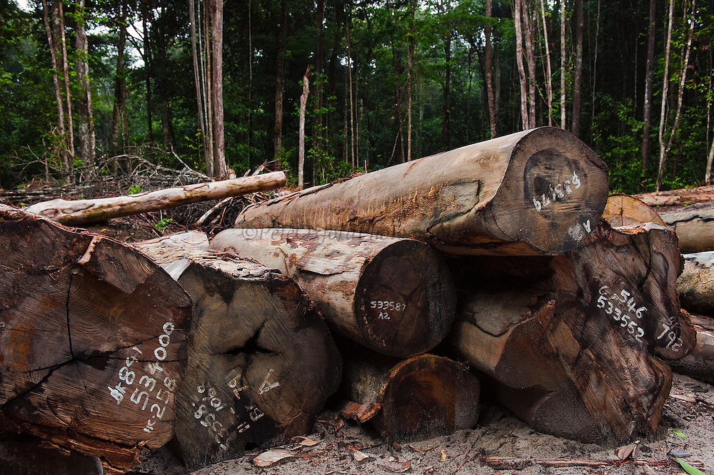 Low Impact Logging<br /> Rain Forest<br /> Iwokrama Reserve<br /> GUYANA<br /> South America