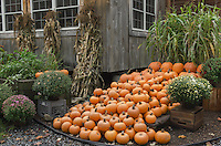 Farmstand with fall produce and flowers, Willmington Vermont