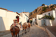 Pack poines on the narrow streets & houses of Hydra,  Greek Saronic Islands. .<br /> <br /> Visit our GREEK HISTORIC PLACES PHOTO COLLECTIONS for more photos to download or buy as wall art prints https://funkystock.photoshelter.com/gallery-collection/Pictures-Images-of-Greece-Photos-of-Greek-Historic-Landmark-Sites/C0000w6e8OkknEb8