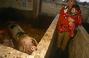 A one year-old child is carried by her mother and shown where a sow is bringing up its litter of piglets, at a city farm, on 18th March 1996, in south London, England.