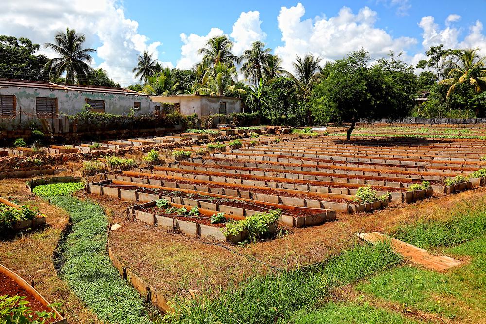 Vegetable garden in San Miguel de los Banos, Matanzas, Cuba.