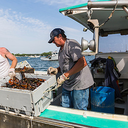"""Ryan Schultz (left) helps Captain Mark Havener unload lobsters from his boat, """"Who R U"""" at the Friendship Lobster Co-op in Friendship, Maine."""