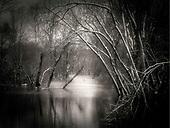 Black & White (Nature)