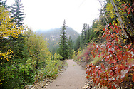 A foggy trail in Autumn down Spearfish Canyon shows all the colors of fall.
