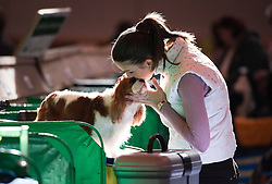 © London News Pictures. 08/03/2012.  Ivett Szabo kisses her dog Benitos Companeros Unaffectedness a Cavalier King Charles Spaniel before it goes on show on day one of Crufts at the Birmingham NEC Arena on March 8, 2012 in Birmingham.  Crufts, which is the largest annual dog show in the world, hosts over 20,000 dogs and owners who compete in a variety of categories. Photo credit : Ben Cawthra/LNP