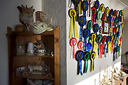 Rosettes and sheep competition mementoes adorn the wall and mantlepiece of champion breeder Vic Bull's crofting bungalow home overlooking Loch Bay, Waternish, Isle of Skye Scotland. Afternoon sunlight pours through a front window into his living room which serves as a shrine to the Sheep. Having already refused a half million Pounds for his house and spectacular view high up on a hill, he prefers to breed his beloved Blackface sheep which he shows only twice a year at local competitions in the Dunvegan area and the prizes and awards are proof of his success. Vic now lives alone rearing his livestock with four sheepdogs for training and company. Image taken for the 'UK at Home' book project published 2008.
