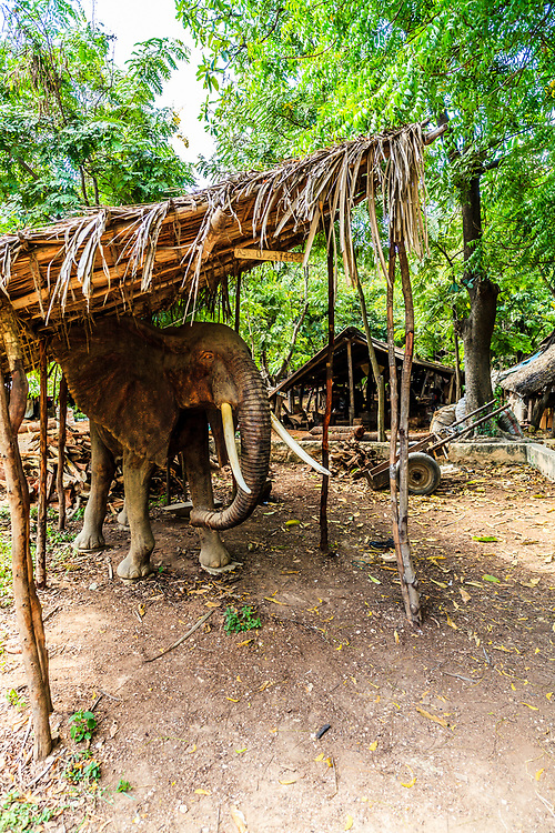 A huge wooden handicrafted elephant in the Akamba Handicrafts Cooperative in Mombasa, Kenya. The Akamba Handicrafts Cooperative is a nonprofit organization that manufacturers and exports fine woodcarvings, animal sculptures, decorative accessories, and fancy customized goods.