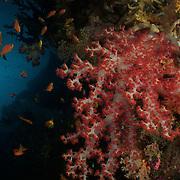 Dive Spot: Four Kings