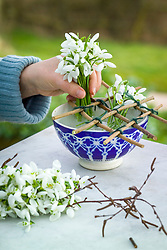 Making arrangement of snowdrops in Moroccan bowl - adding snowdrops and twigs using noughts and crosses grid. Galanthus nivalis