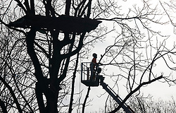 © Licensed to London News Pictures. 28/01/2021. London, UK. A workman cuts tree branches as HS2 Rebellion protestors remain camped in trees above Euston Square Gardens. Protestors are resisting a police operation to remove them for a second day. It is reported the protesters have built a 100ft tunnel under the gardens. Photo credit: Peter Macdiarmid/LNP