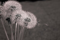 Infrared seeds.  ©2016 Karen Bobotas photographer