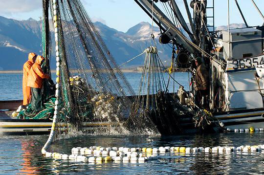 Commercial fishing boat in harbor. Katmai, Alaska.