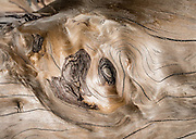 Twisty driftwood grain pattern. Double Bluff State Park (Useless Bay Tidelands), Whidbey Island, Washington, USA. While the tidelands are a State Park, the upland portion is Double Bluff Park, operated by the Friends of Double Bluff and Island County, including an off-leash dog park.