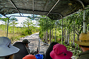 POV as a family rides in a swamp buggy entering Big Cypress National Park.
