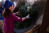 Chine, Province du Yunnan, region de Xishuangbanna, sechage des feuilles de thé de Pu'er // China, Yunnan, Xishuangbanna district, drying tea leaves of Pu'er tea