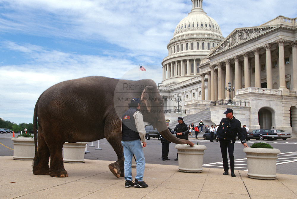 An Asian elephant from the circus visits the U.S. Capitol April 6, 1997 in Washington, DC.  Congress voted new laws aimed at protecting endangered asian elephants.