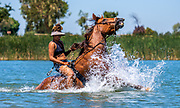 Brianna Noble swims with her horse, Dapper Dan at Woodward Reservoir in Oakdale, California.